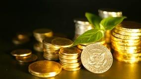 金黄硬币和新芽绿色叶子在黑背景的 财务事务、抵押和银行业务概念的成功 股票录像