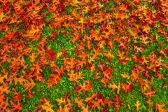 金黄秋天叶子墙纸样式背景 库存照片