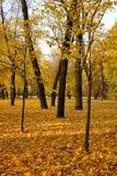 金黄秋天在公园在圣彼德堡 免版税库存照片