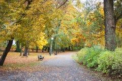 金黄秋天在公园在10月 免版税库存照片
