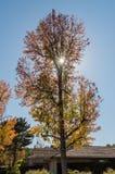 金黄秋天在南加州-种类,在12月中旬和集合反对精采清楚的加利福尼亚天空 库存照片
