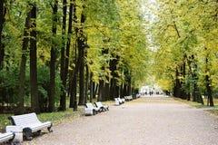 金黄秋天在圣彼德堡公园  图库摄影
