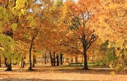 金黄秋天在城市公园 胜利公园,萨拉托夫,俄罗斯 免版税库存照片