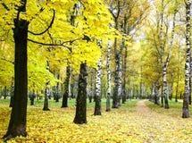 金黄秋天在城市公园 免版税库存图片