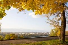 金黄秋天在城市公园 免版税图库摄影