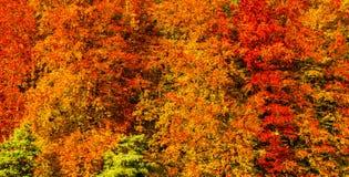 金黄秋天树墙纸样式背景 图库摄影