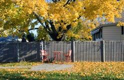 金黄秋天的后院 库存照片