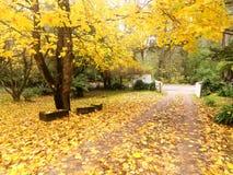 金黄秋天的庭院 库存照片