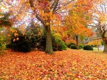 金黄秋天的庭院 库存图片