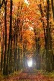 金黄秋天的森林 免版税库存照片