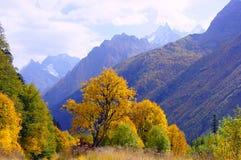 金黄秋天的风景在10月 免版税库存照片
