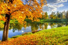 金黄秋天醇厚的秋天在Pavlovsky公园, Pavlovsk,圣彼得堡,俄罗斯 库存照片