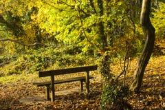 金黄秋天颜色作为太阳通过Killynether木头的沼地斑纹在Scrabo塔小山在Newtownards,唐郡  库存图片