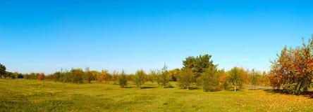 金黄秋天风景在公园 库存照片