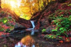 金黄秋天风景,与小瀑布的山小河在森林里 库存照片