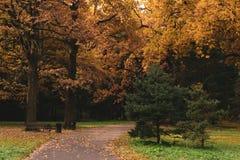 金黄秋天-在橙黄树背景的长凳  免版税图库摄影
