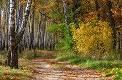 金黄秋天 路在落叶林,晴朗的10月天里 库存照片