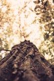 金黄结构树 库存图片