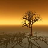金黄结构树 库存照片