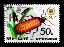 金黄网飞过的甲虫网翅目极光, Unep -世界环境日:植物群和动物区系serie,大约1992年 库存照片
