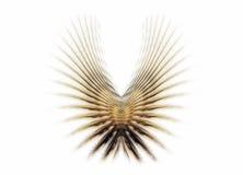 金黄翼 向量例证