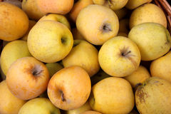 金黄苹果的篮子 免版税库存图片