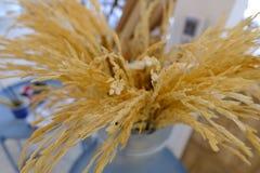 金黄茉莉花米在咖啡馆 库存照片