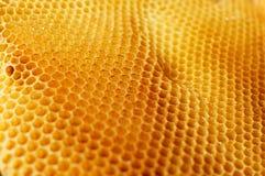 金黄蜂窝结构侧视图 库存图片