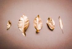 金黄被绘的树叶子 免版税库存照片