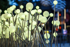金黄针蘑菇闪亮指示。 库存图片