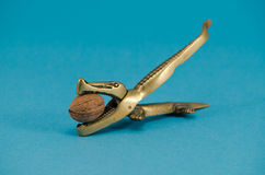 金黄鳄鱼核桃希腊螺母易碎工具蓝色 库存图片