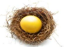 金黄鸡蛋 免版税图库摄影