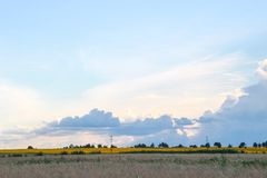 金黄麦子收获在领域和秀丽天空的 免版税库存图片