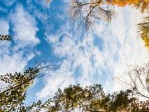 金黄黄色树在秋天的一个公园与蓝天 免版税库存图片