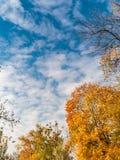 金黄黄色树在秋天的一个公园与蓝天 库存图片