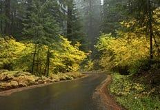 金黄黄色秋天多雨森林公路 免版税库存图片