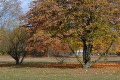 金黄2015年10月在柏林斯潘道,德国 库存照片