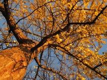 金黄11月结构树 免版税库存照片