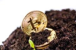 金黄bitcoin在土壤和生长植物铸造 真正货币 隐藏货币 新的真正金钱 免版税库存图片