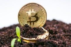 金黄bitcoin在土壤和生长植物铸造 真正货币 隐藏货币 新的真正金钱 库存照片