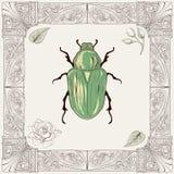 金龟子甲虫图画 免版税库存照片