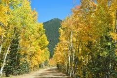 金黄亚斯本被排行的秋天乡下公路 库存图片