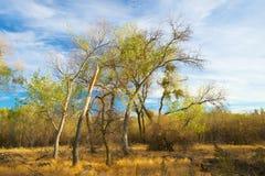 金黄光的秋天森林 免版税库存照片