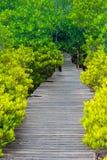 金黄公园在Rayong,泰国 库存图片