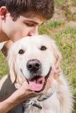 金黄公园猎犬 库存图片