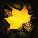 金黄叶子和杉木锥体-上色正方形 免版税库存照片