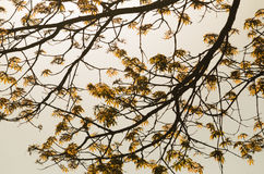 金黄叶子 库存图片