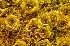 金黄织品玫瑰背景 库存照片