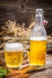 金黄啤酒由麦子和蛇麻草做成 库存照片