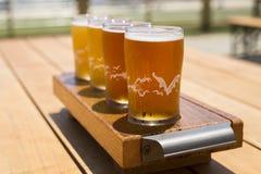 金黄啤酒飞行在明亮的夏日 库存图片